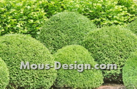 Cutting back the boxwood - checklist