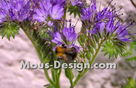 Bees: magical lures in the garden